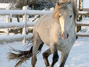 Volador paard