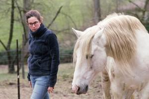 paard als gids