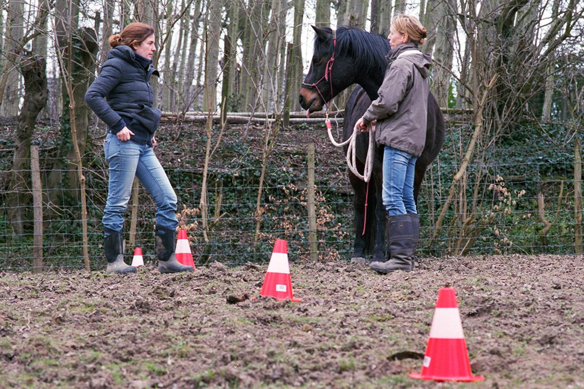 Individuele paarden coaching