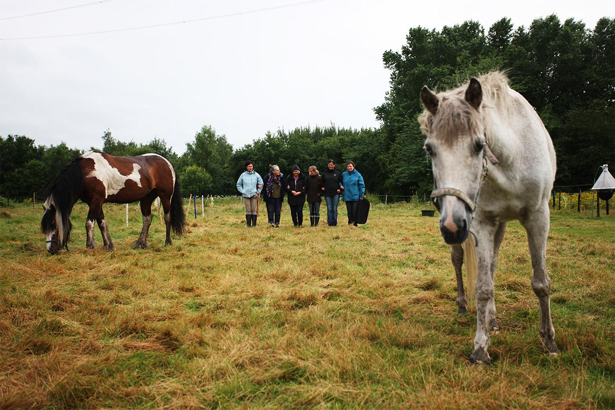 Team coaching paarden